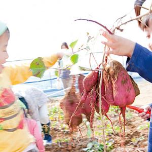 子どもたちや保護者に食の大切さを伝える、食育指導にも力をいれています。