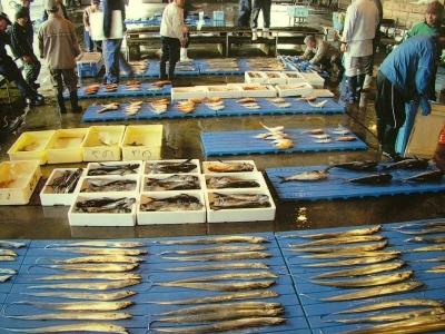 漁港から直送の、朝獲れ鮮魚をお値打ち価格でお届けしています。