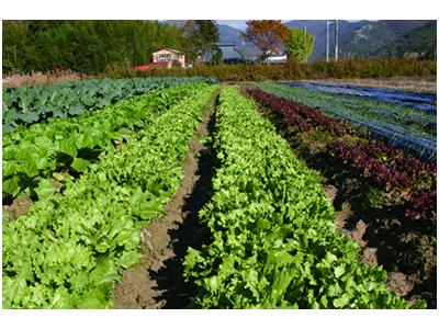 自社農園あり。地元の生産者への感謝の気持ちをこめて、安全で美味しい料理づくりに励んでいます。