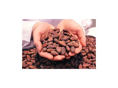 チョコレート系スイーツも多く製造しており、カカオにはこだわりがあります