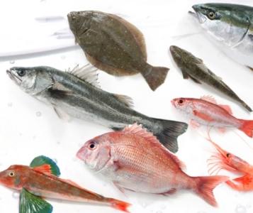 四季折々の旬の魚の味をお楽しみいただいています。