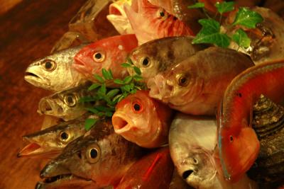 「鯛めし」など、旬魚旬菜を使った一品料理が人気の和食店を大阪難波で3店舗経営しています!