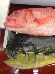 毎日全国の市場や漁港から新鮮な魚を買い付け、その日に仕込み、提供。魚の目利きも身につきますよ