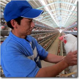 大正14年(1925年)に創業した当社。養鶏会社として安定した経営基盤が築かれています。