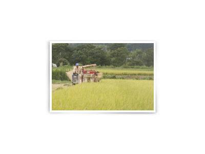 おかわり自由、いつでも炊き立てのごはんは、安心安全な品質のお米を使用しています。