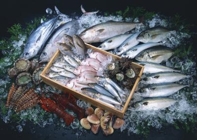 未経験者歓迎!イチから学び「魚のプロ」をめざせます!