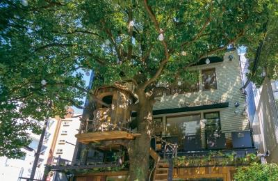 <広尾駅徒歩1分>大きな木とツリーハウスが目印の緑あふれるナチュラル系ガーデンカフェ♪