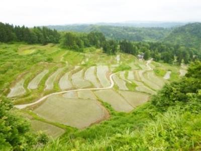 小千谷市は新潟のほぼ中央。岩沢地域には、自然の地形を活かした美しい棚田が見られます。