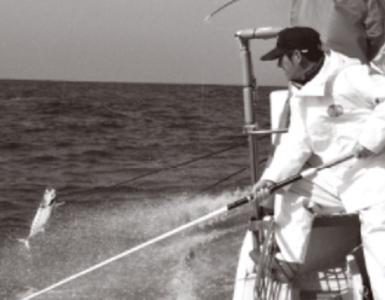 伝統の一本釣りで釣った鰹など、こだわり新鮮食材を使っています。