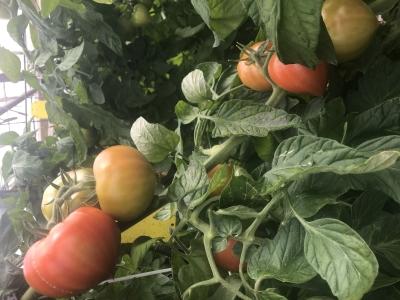 「あいち鴨」などのお肉類から、トマト・アスパラ・ぶどうなど、愛知県東三河エリアの食材を取り入れます。