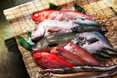 多種多様な魚を仕入れ、ていねいにさばく職人のお仕事です!