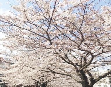 2018年3月31日(土)OPEN☆