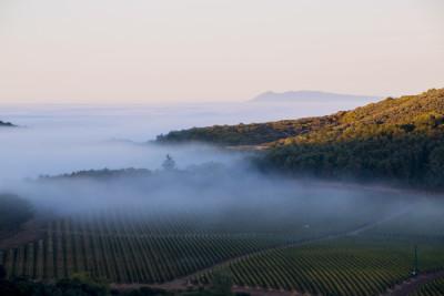 ワイナリー研修で壮大な葡萄畑を直接目にする機会も!