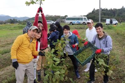 月に一度の研修日!この日は新就農家さんの収穫お手伝い。
